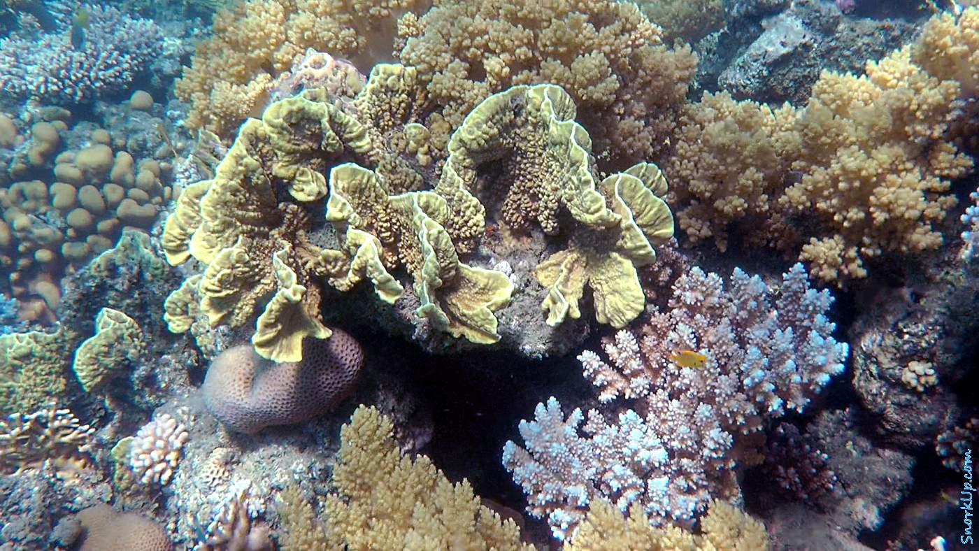 Коралловые рифы Рас Багдади